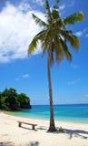 在空白沙子热带海滩的棕榈树在Malapascua海岛,菲律宾 免版税库存照片