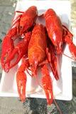 在空白牌照的小龙虾 免版税库存照片