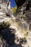 在空白的树岩石之间 免版税库存图片