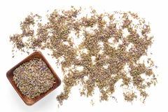 在空白的种子的背景淡紫色 免版税库存图片