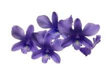 在空白背景查出的兰花分行 库存照片