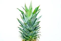 在空白背景查出的成熟全部的菠萝 免版税库存照片
