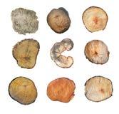在空白背景查出的木树桩 与年轮的圆的砍的树作为木纹理 库存照片