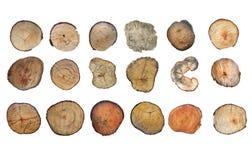 在空白背景查出的木树桩 与年轮的圆的砍的树作为木纹理 免版税库存图片