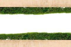 在空白背景查出的框架绿草 免版税库存图片