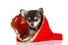 在空白背景查出的狗 库存图片