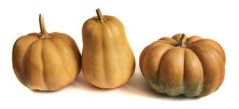 在空白背景的南瓜 新鲜和橙色 免版税库存图片