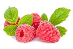 在空白背景的开胃莓 库存照片