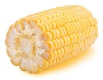 在空白背景的玉米 图库摄影