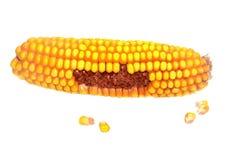 在空白背景的玉米 库存图片