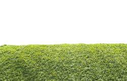 在空白背景的绿草 库存图片