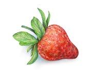 在空白背景的草莓 草莓莓果水彩图画  被画的手工 免版税库存照片