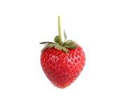 在空白背景的草莓 库存图片