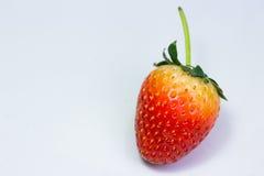 在空白背景的草莓 库存照片