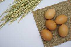 在空白背景的鸡蛋 免版税图库摄影