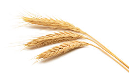 在空白背景的麦子耳朵 库存照片
