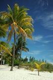 在空的热带海滩的可可椰子树 图库摄影