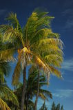 在空的热带海滩的可可椰子树 库存照片