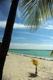 在空的热带海滩的可可椰子树 库存图片