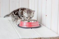 在空的猫碗附近的美丽的灰色小猫 库存照片
