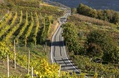在空的葡萄园在秋天季节期间,瓦尔泰利纳,意大利之间的路 库存照片