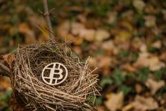 在空的鸟筑巢木被咬住的硬币 免版税图库摄影