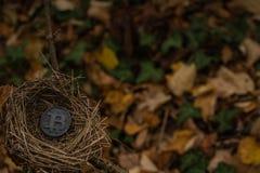 在空的鸟筑巢黑被咬住的硬币 免版税库存照片