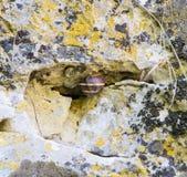 在空隙Devitakskoy的葡萄蜗牛陷下,保加利亚 库存图片