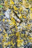 在空隙Devitakskoy的葡萄蜗牛陷下,保加利亚 图库摄影
