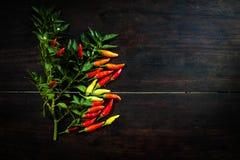 在空间木桌上的新鲜的辣椒给的t做广告 图库摄影