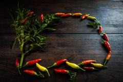 在空间木桌上的新鲜的辣椒给的t做广告 库存照片