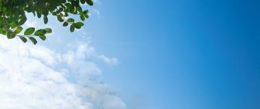 在空间蓝天背景的绿色叶子 免版税库存照片