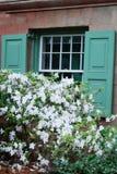 在窗口前面的美丽的白色开花的灌木与绿色快门在查尔斯顿 免版税图库摄影