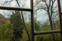 在窗口后的森林 免版税图库摄影