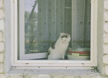 在窗口后的猫 免版税库存图片