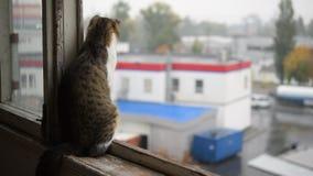 在窗口基石的猫体验雨的 影视素材