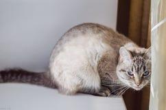 在窗口基石的猫 免版税库存照片