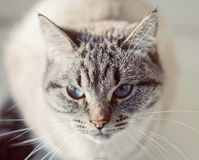 在窗口基石的猫 免版税库存图片