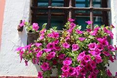 在窗口基石的花 免版税图库摄影