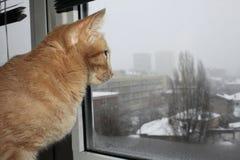 在窗口旁边的一只逗人喜爱的猫 库存图片