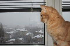 在窗口旁边的一只逗人喜爱的猫 库存照片