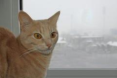 在窗口旁边的一只逗人喜爱的猫 图库摄影