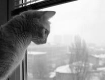 在窗口旁边的一只逗人喜爱的猫 免版税库存照片