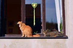 在窗口的两只猫 免版税图库摄影