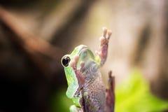 在窗口的小青蛙 免版税库存图片