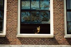 在窗口的猫在阿姆斯特丹,荷兰 库存图片