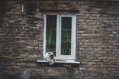 在窗口的猫 免版税库存图片