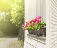 在窗口的红色大竺葵在庭院里 库存照片