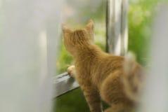 在窗口的红色猫 免版税库存照片