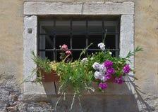 在窗口的花与格子 免版税库存照片